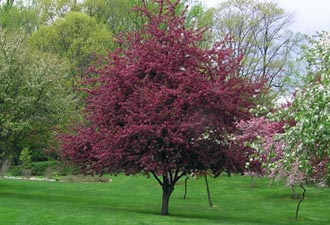 Shade Tree Commission